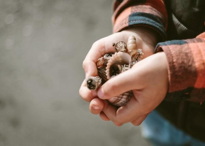 Winter Shell Hunting on Topsail Island